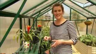 Great Greenhouses in Your Gard
