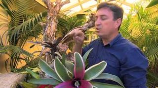 Creating a living Bromeliad tr