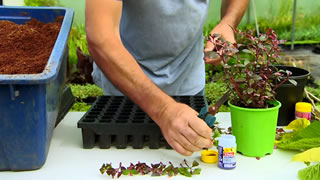 Propagating plants at home