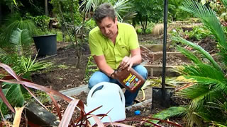 Transplanting plants the right