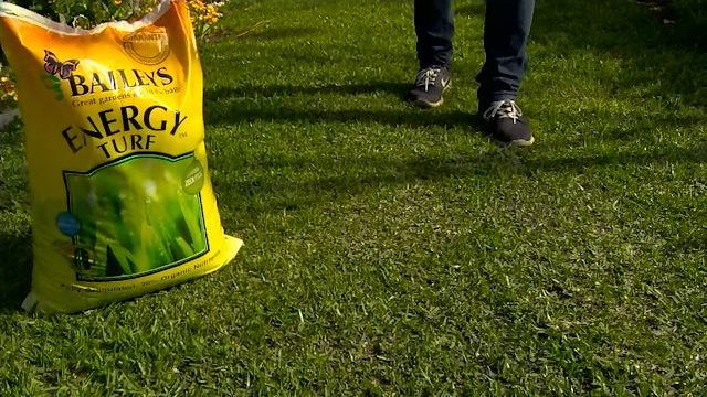 Energy Turf & Lawn Reviver