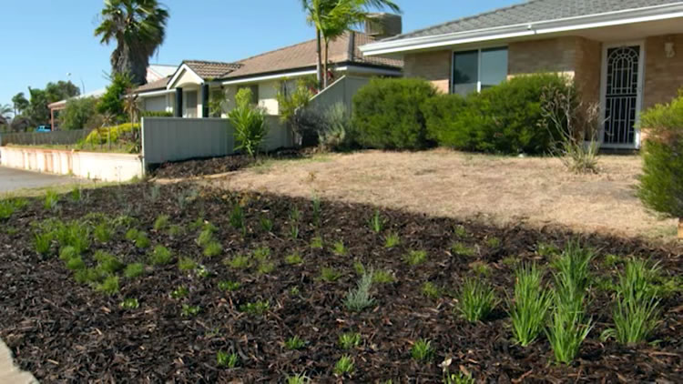 Waterwise Verge Makeover PT 2