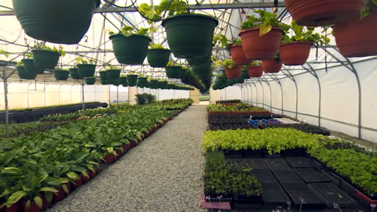Waldecks growing nursery