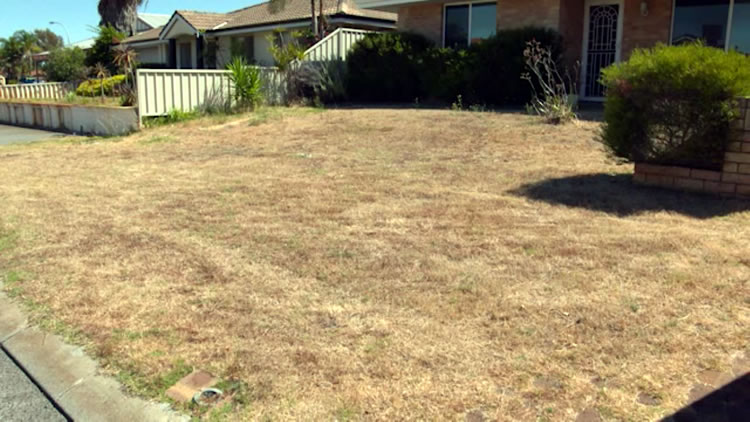 Waterwise Verge Makeover PT 1
