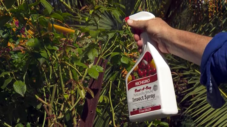 Naturally based insect spray for your garden