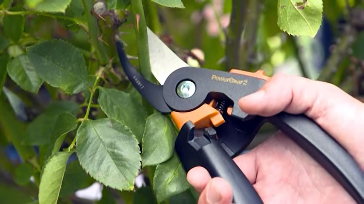 The importance of irreplaceable secateurs