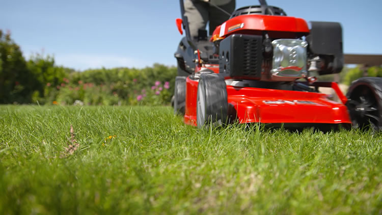 Lawn Renovation Tips