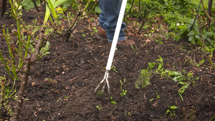 Cultivating Your Soil