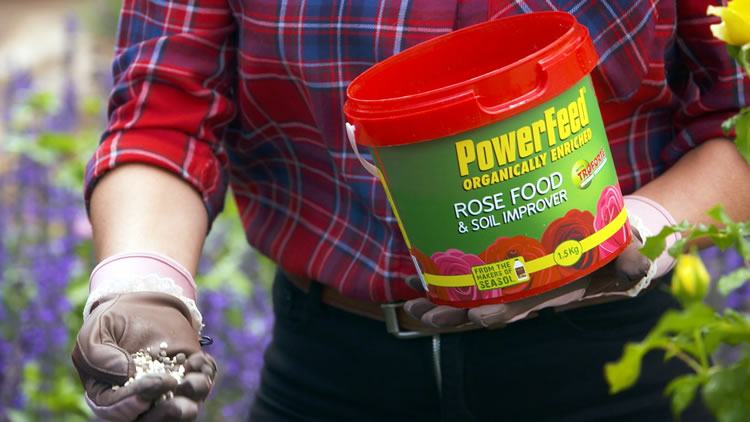 PowerFeeding Roses for Great Results