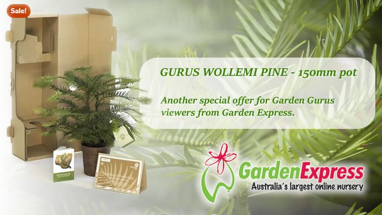 Garden Express Wollemi Display